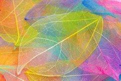 Rainbow skeleton leaf with beautiful texture. leaf veins. Product Image 2