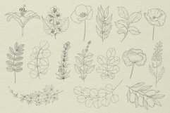 Botanical Procreate stamp brushes, vector clipart Product Image 4