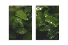 Greens after rain. 15 images BUNDLE Product Image 6