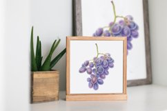 Watercolor exotic fruits Product Image 5