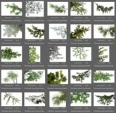 50 Christmas Tree Branch Overlays Product Image 4