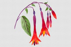 Orange-red Fuchsia watercolor png Product Image 3