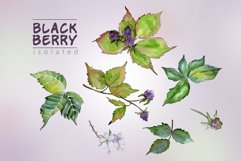 Sweetly blackberry JPG watercolor set  Product Image 3