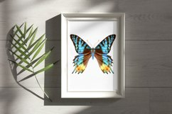 34 Hand-Painted Watercolor Butterflies Product Image 4
