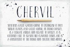 Chervil Product Image 2