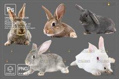 Photoshop overlay Easter bunny overlay Product Image 4