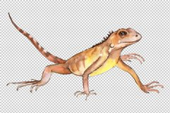 Iguana-1 Watercolor png Product Image 3