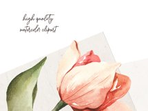 Watercolor clipart coral pink Tulips. Floral digital set PNG Product Image 3