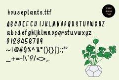 Houseplants Bundle Product Image 4