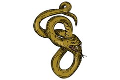 Viper Coiled Ready To Pounce Drawing Product Image 1