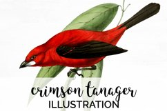 Bird Clipart Tanager Product Image 1