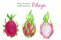 Dragon Fruit Watercolor Clipart Png Product Image 2