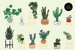 Houseplants Bundle Product Image 2