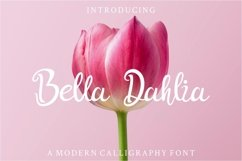 Bella Dahlia Product Image 1