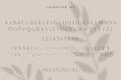 Vendeur - Elegant Serif Font Product Image 5