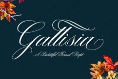 Gallisia Script Product Image 1