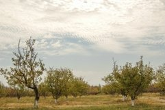 Garden with fruit trees against the sky with clouds Product Image 1