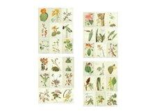 Blooming Desert Rose Botanical Journal Scrapbook Kit Product Image 2