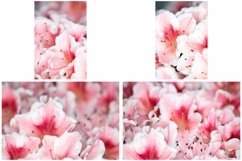 40 Pink Flower Blossom Photographs Close Up Product Image 3