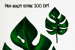 Hand drawn tropical leaves bundle Product Image 2