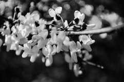 Spring Flowers Black and White Product Image 1