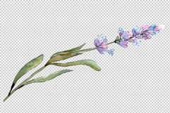 Bouquet of idyll lavender Watercolor png Product Image 4