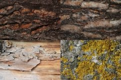 Set of forest backdrops - tree bark backgrounds Vol4 Product Image 5