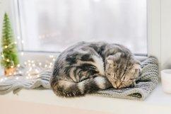 Scottish fold cat sleeps on a windowsill on a winter day Product Image 1