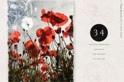 Poppy Blossom Vector Illustrations Product Image 6