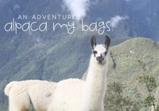 Alpaca My Lunch - Fun and Quirky Font Product Image 4