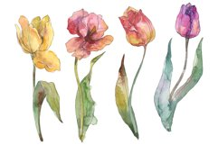 Assorted tulip bouquet Watercolor png Product Image 1