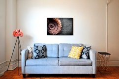 20 Photos Seafood. Fresh octopus background. Product Image 6