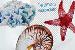 Tropical Sea Life Watercolor Clip Art Product Image 4