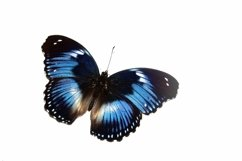 11 Butterfly Collection on White Background Lepidoptera Product Image 2