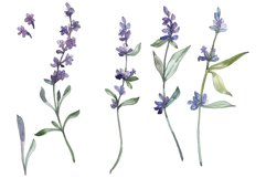 Bouquet summer breeze lavender watercolor png Product Image 1