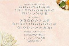 Web Font Cleona Font Product Image 5