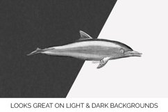 Dolphin Clipart Product Image 2