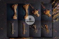 Dried flowers Product Image 1
