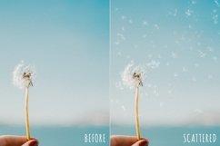 Blowing dandelion seeds photoshop overlays Product Image 2