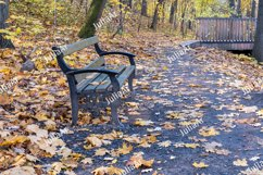 Bench and walk path in autumn park Product Image 1