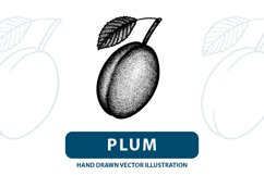 Plum engraving style vector illustration. Product Image 1
