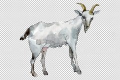 Agriculture goat Watercolor png Product Image 3