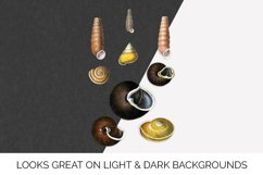 Shells Clipart Helix Product Image 2