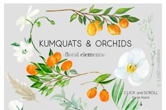 Kumquat & white orchids. Watercolors clipart collection. Product Image 6