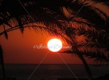 Palm Tree Sunset Product Image 1