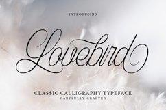 Web Font Lovebird Product Image 1