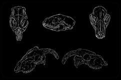 White Line Art Animal Fox Sheep Skull Horns For Halloween Product Image 5