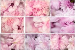 50 Pink Flower Blossom Photographs Close Up Backgrounds Product Image 6