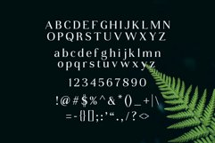Daria Type Product Image 3