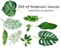 Watercolor tropical leaves ,clip art. Drawing Tropical Product Image 5